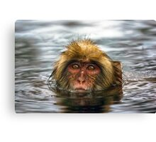 Snow Monkey in Hot Springs Canvas Print