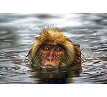Snow Monkey in Hot Springs Photographic Print