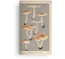 Illustrations of British Fungi by Mordecai Cubitt Cook 1891 V2 0181 AGARICUS  COLLYBIA  XYLOPHILUS Canvas Print
