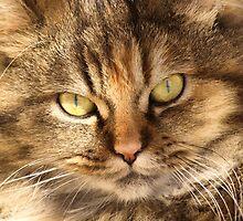 Furry Buddy by jean-louis bouzou