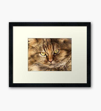 Furry Buddy Framed Print