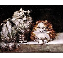 Persian Cats, Silver Tabby and Orange and White Photographic Print