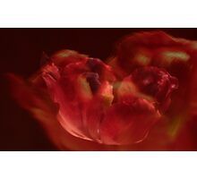 A Passionate Dance ©  Photographic Print