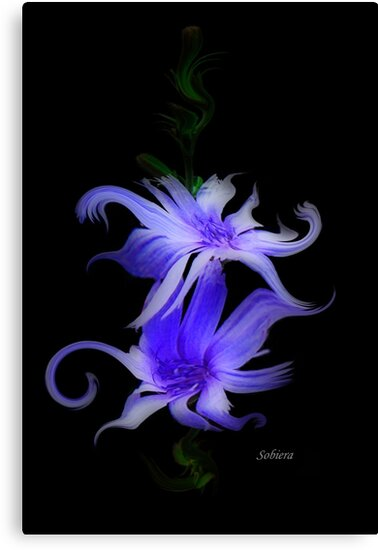 Dance of the Flowers by Rosemary Sobiera