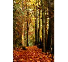 Fall Walk Photographic Print