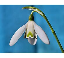 Snow drop in blue Photographic Print