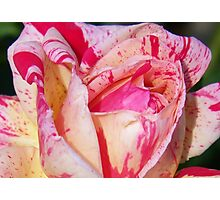Heart of the Rose Photographic Print