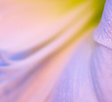 Pastel - An Abstract Flower by Sarah Beard Buckley