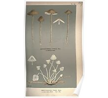 Illustrations of British Fungi by Mordecai Cubitt Cook 1891 V2 0369 AGARICUS  MYCENA  TENUIS Poster
