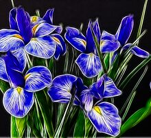 Blue Iris Flowers by Beatriz  Cruz