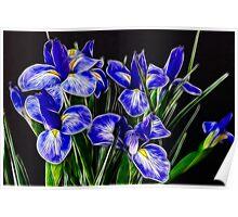 Blue Iris Flowers Poster