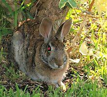 Bunny cuteness by ♥⊱ B. Randi Bailey