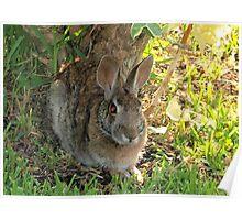Bunny cuteness Poster