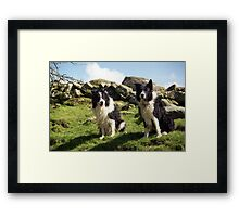 Two Wet Collies Framed Print