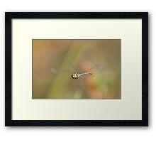 On the Fly Framed Print