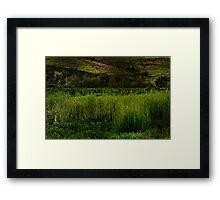 Grassy Meadow Framed Print