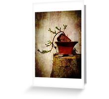 Cascading Bonsai In Training  Greeting Card