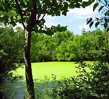 Sheldon Marsh Algae Pond by SRowe Art