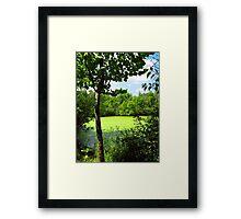 Sheldon Marsh Algae Pond Framed Print