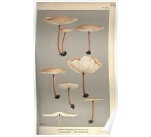 Illustrations of British Fungi by Mordecai Cubitt Cook 1891 V2 0245 AGARICUS  COLLYBIA  DRYOPHILUS Poster