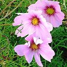 Flowers, Botanic Gardens, Dublin Ireland by heartyart