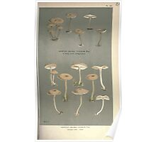 Illustrations of British Fungi by Mordecai Cubitt Cook 1891 V2 0281 AGARICUS  COLLYBIA  CLUSILIS Poster
