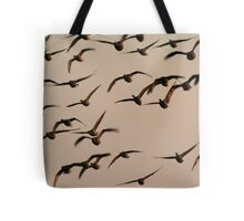 Brent geese at sunrise Tote Bag