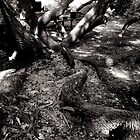 Roots by Jay72