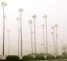 South Highway 101 by deepbluwater