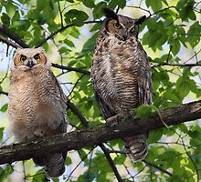 Great Horned Owl Mother and Owlet by Gary Fairhead