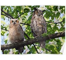 Great Horned Owl Mother and Owlet Poster