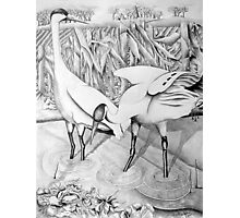 Whooping Crane Photographic Print