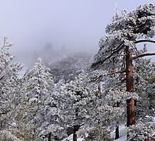 Cool Warmth (Taken at Mt. Baldy, 30 miles from Los Angeles) by Steve  Buffington