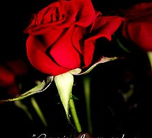 The Rose Card by Julia Harwood