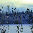 """Teasles & Clouds featured in """"Cees Fun Artsy Friends"""" by ©The Creative  Minds"""