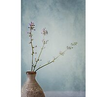 The Sweetness of Solitude and Tranquility Photographic Print