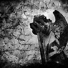 Fallen by Liza Yorkston