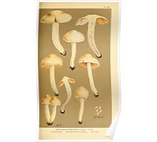 Illustrations of British Fungi by Mordecai Cubitt Cook 1891 V6 0169 CORTINARIUS  HYDROCYBE  BICOLOR Poster