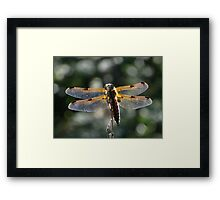 The four-spotted Chaser Framed Print