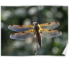 The four-spotted Chaser Poster
