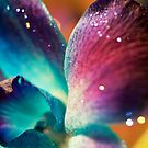 Stardust by Angela  Ardis