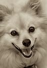 Laughing Puppy by Renee Hubbard Fine Art Photography