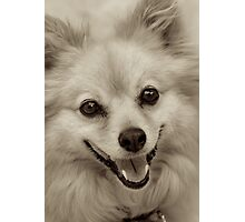 Laughing Puppy Photographic Print