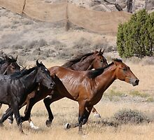 Horses On The Move by Arizonagirl