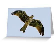 Eagle Glide Greeting Card