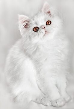 George on White by micklyn