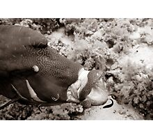 Cleaning a humphead wrasse Photographic Print