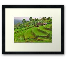 Green rice terraces Framed Print