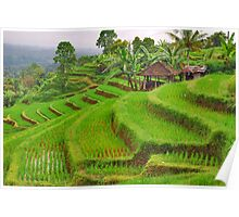 Green rice terraces Poster