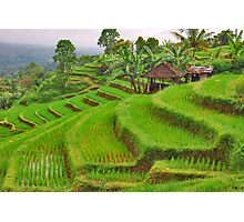 Green rice terraces Photographic Print